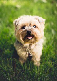 Wissenswertes über Ihren Hund