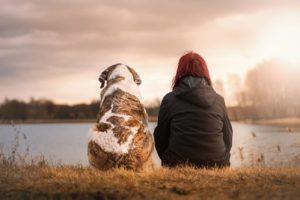 Welche Hunderasse