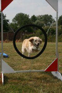 Hundeerziehung in der Welpenschule