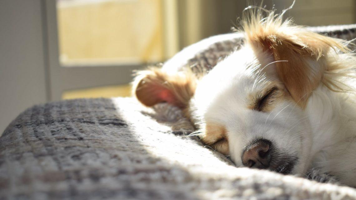 Hundehütte als Heimprojekt