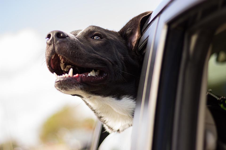Müssen Hunde gechippt werden – und wenn wann?