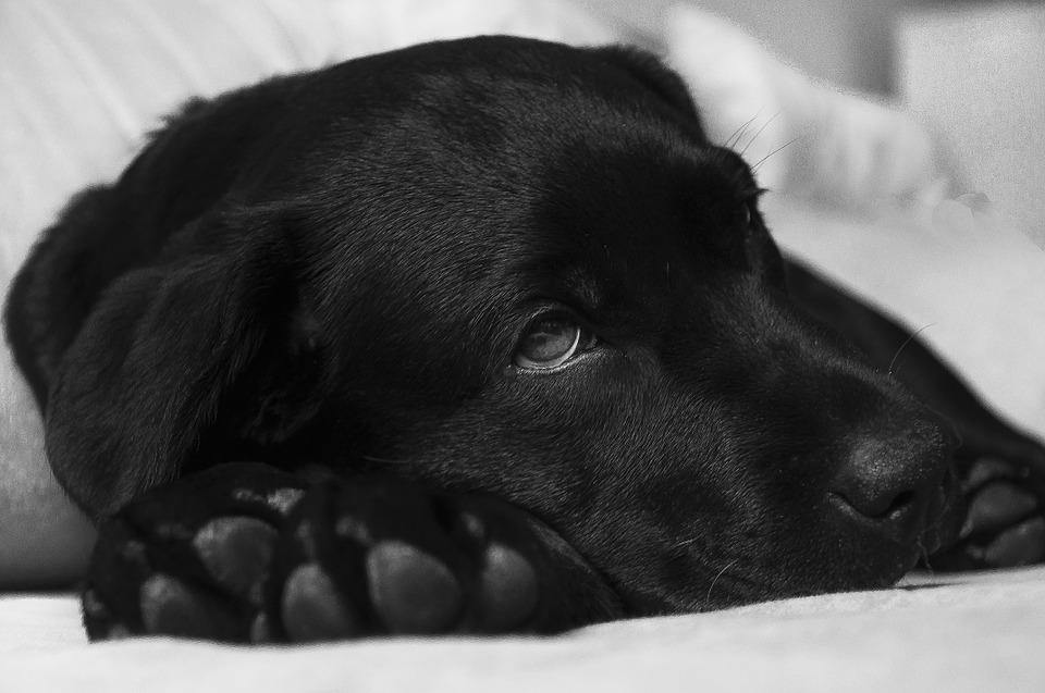Sollte man einen Hund kastrieren? Was sind die Vor- und Nachteile?