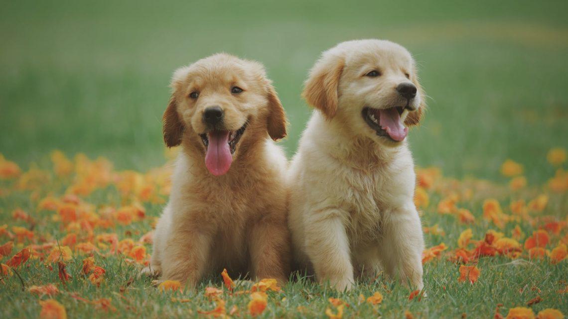 Tipps zum Abschluss der Hundehaftpflichtversicherung nach dem Welpenkauf